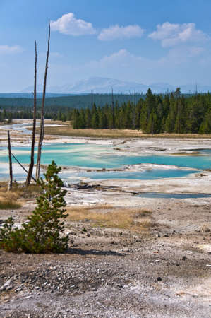 Norris Geyser Basin, Yellowstone National Park USA