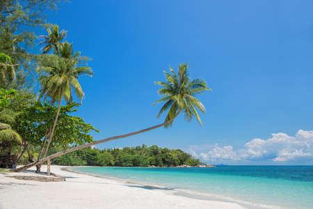 Photo pour Tropical beach landscape with a leaning palm tree - image libre de droit
