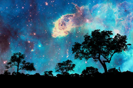 Photo for Night landscape with silhouette of trees and starry night - Royalty Free Image