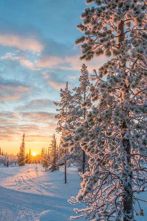Foto de Snowy landscape at sunset, frozen trees in winter in Saariselka, Lapland, Finland - Imagen libre de derechos