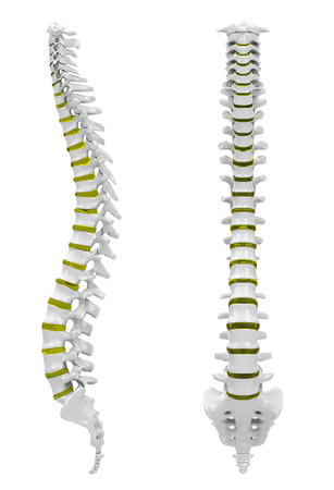 The backbone