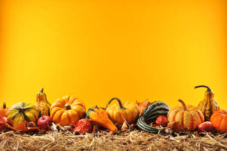 Thanksgiving ? many different pumpkins on straw in front of orange background with copyspace