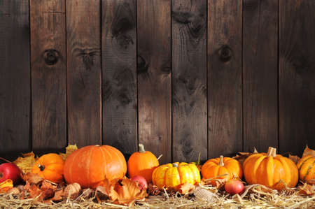 Thanksgiving - many different pumpkins on straw in front of old weathered wooden boards with copyspaceの写真素材