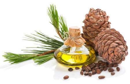 Cedar pine nuts, cones and oil  isolated on white background
