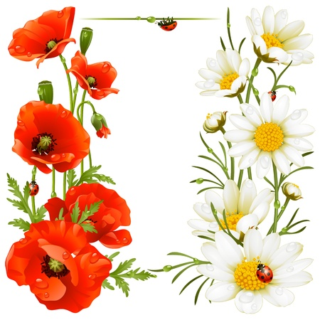 Poppy and Camomile design elements