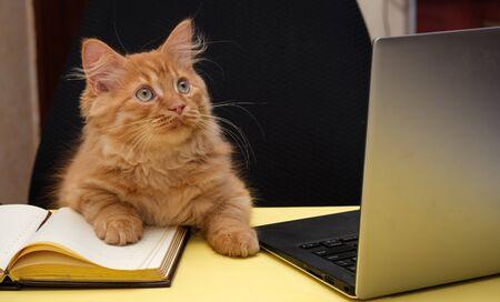 Foto de beautiful cat sits at a table near the diary and laptop - Imagen libre de derechos