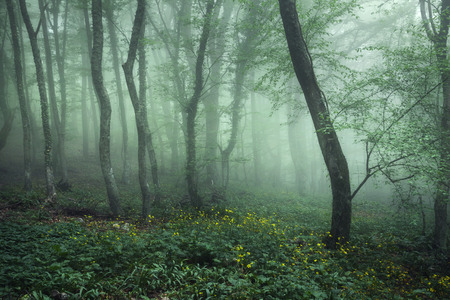 Trail through a mysterious dark forest in fog with green leaves and yellow flowers. Spring morning in Crimea. Magical atmosphere. Fairytale