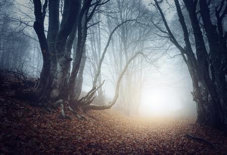 Photo pour Scary mysterious forest in fog in autumn. Magic trees. Nature misty landscape - image libre de droit