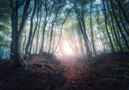Photo pour Beautiful mystical forest in fog at sunrise in autumn. Colorful landscape with enchanted trees with orange and red leaves. Scenery with path in dreamy foggy forest. Fall colors in october. Nature - image libre de droit