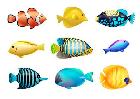 Ilustración de Set of drawings of bright exotic tropical fish from coral reefs. Vector graphics - Imagen libre de derechos