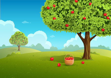 Apple orchard with basket of apples. Landscape background. Vector illustration