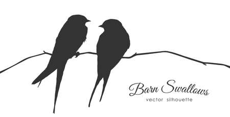 Illustration pour Vector illustration: Isolated Silhouette of two Barn Swallows sitting on a dry branch on white background. - image libre de droit