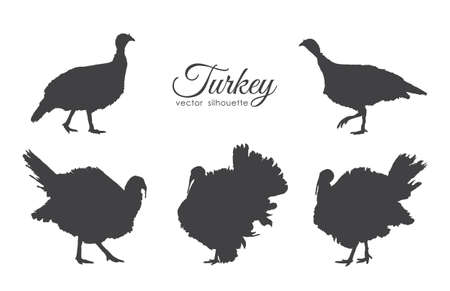 Illustration for Vector illustration: Set of turkeys silhouette isolated on white background. - Royalty Free Image