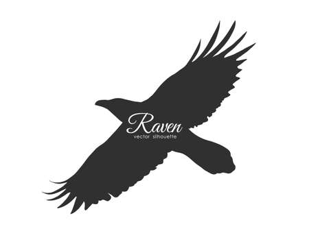 Illustration pour Silhouette of flying Raven isolated on white background. Black bird in fly. - image libre de droit