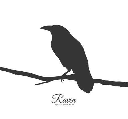 Illustration pour Vector illustration: Raven sitting on branch on white background. Silhouette of bird. - image libre de droit