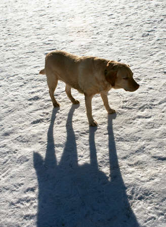 The dog and its shadow.