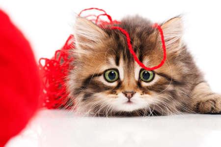 Foto de Cute kitten - Imagen libre de derechos