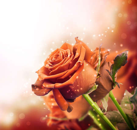 background with red roses with sparkles