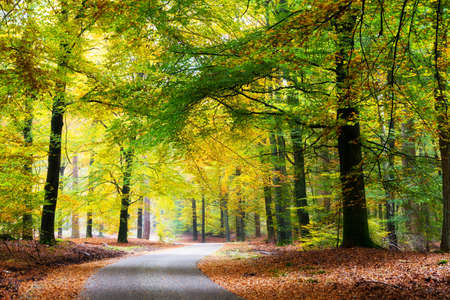Photo pour Beautiful road through the forest in autumn in national park  De Hoge Veluwe  in the Netherlands - image libre de droit