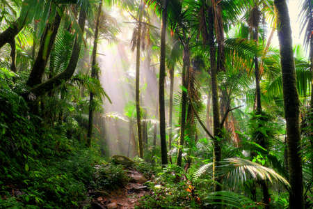Photo for Beautiful jungle path through the El Yunque national forest in Puerto Rico - Royalty Free Image