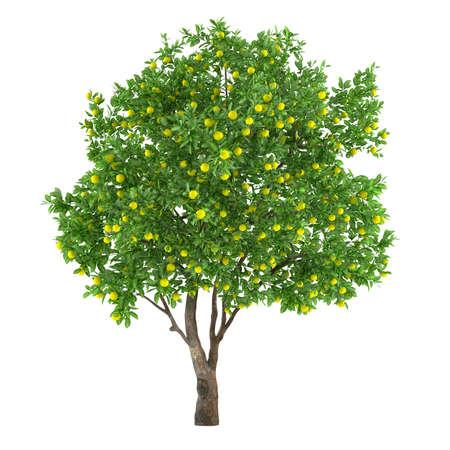 Citrus fruit tree isolated. lemon