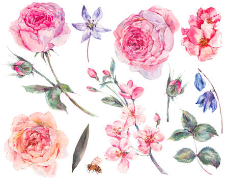 Spring Set vintage watercolor bouquet of pink roses leaves, blooming branches, flowers, bee and wildflowers, watercolor botanical illustration isolated on white background