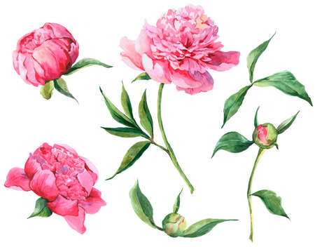 Photo for Set of vintage watercolor pink flowers peonies, leaves, branches - Royalty Free Image