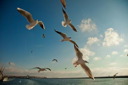 seagull following passenger ship