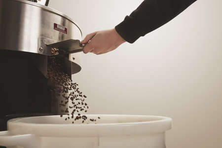 Roaster hand opens hatch slider to allow cooled freshly baked aromatic coffee beans fall into plastc basket from cooling cylinder of professional roasting machine Motion blur on beansの写真素材