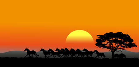 The pictures show a running herd at sunset