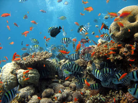 A beautiful picture of a coral reef teeming with life and bubbles in the background. shot in the Red Sea