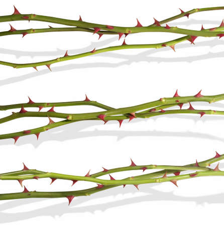 Isolated rose stems