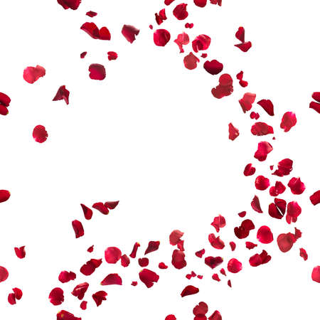 seamless, red rose petals breeze, studio photographed in depth of field, isolated on white