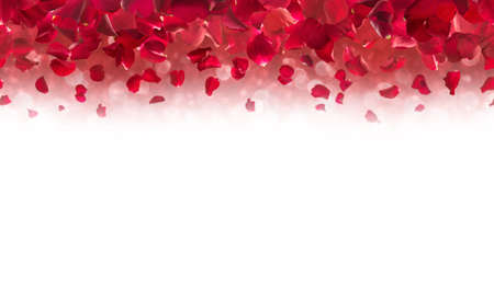 Red rose petals, falling from up above and fading into white