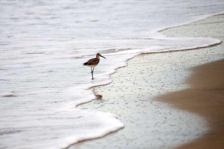 Puerto Vallarta, Mexico; Bird on the beach
