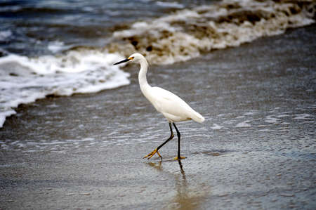 Puerto Vallarta, Mexico; Crane on the beach