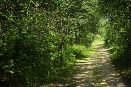 Pathway through brush