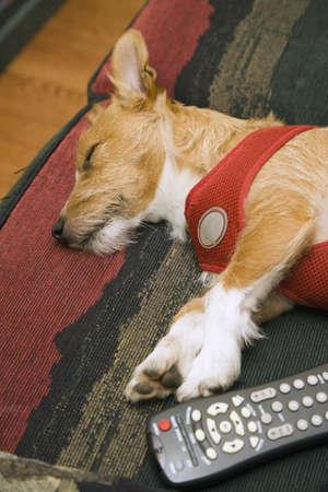 Dog sleeping next to remote control