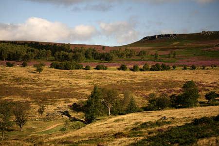 Landscape of rolling hills