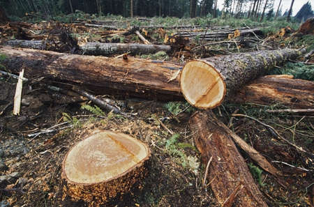 Cut logs in logging area