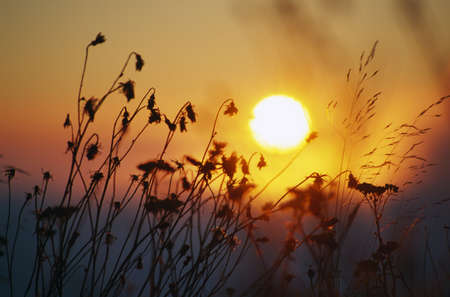 Sunrise behind tall grasses