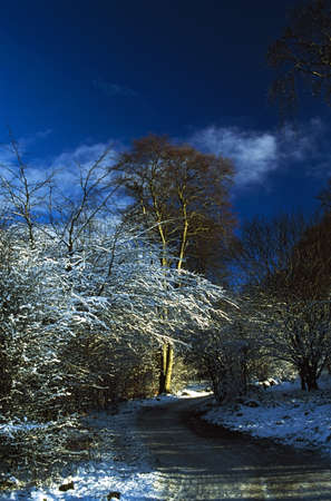 Hoars frost on trees in Longshaw Estate, Derbyshire, England