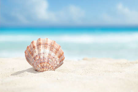 Photo pour Low angle view of a scallop shell in the sand beach of the Caribbean sea - image libre de droit