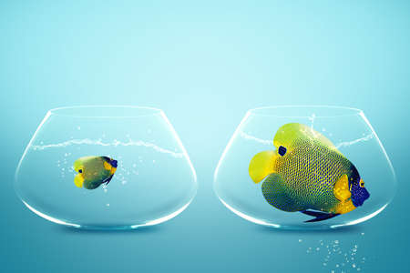 Photo for Large and small angelfish,conceptual image for diet, fat. - Royalty Free Image