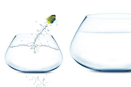 Photo pour Anglefish jumping into bigger fishbowl. - image libre de droit