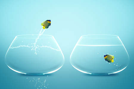 Photo pour Angelfish jumbing to other bowl, Good Concept for new love, new Opprtunity and challenge concept. - image libre de droit