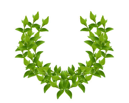 Laurel Wreath made by fresh Green leaves  isolated on white,