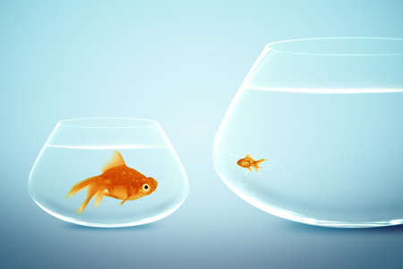 Big and small goldfish,conceptual image for diet, fat.