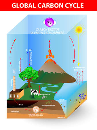 carbon cycle  diagramshows the movement of carbon between land, atmosphere, and oceans