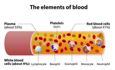 Illustration pour The elements of blood. blood vessel cut section. - image libre de droit